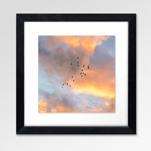 0 - 0 - Summer Birds