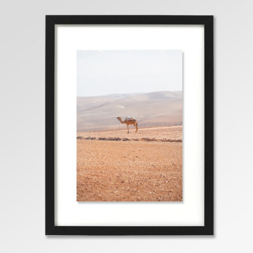 Camel Desert